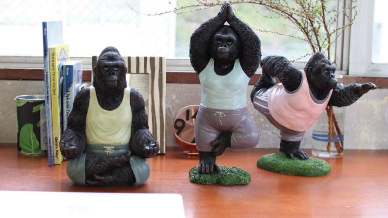 松山のヨガスタジオyoginiaにヨガゴリラがやってきた